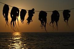 Aliens (Xelisabetta) Tags: sunset canon tramonto aegean greece octopus mandraki nisyros  polipi eos400d xelisabetta  elisabettagonzales