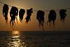 Aliens (Xelisabetta) Tags: sunset canon tramonto aegean greece octopus mandraki nisyros ελλάδα polipi eos400d xelisabetta νίσυροσ elisabettagonzales