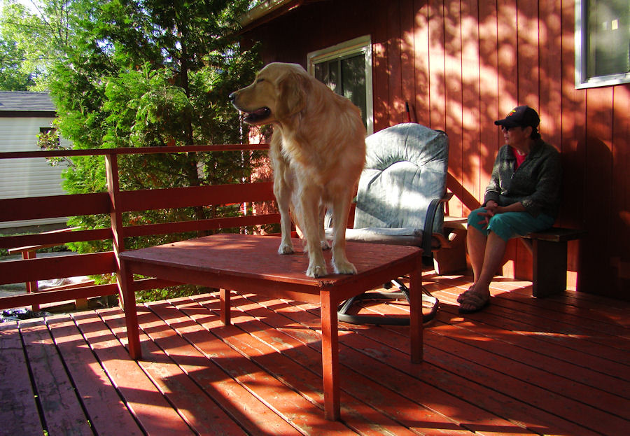 Grace's observation perch on the deck