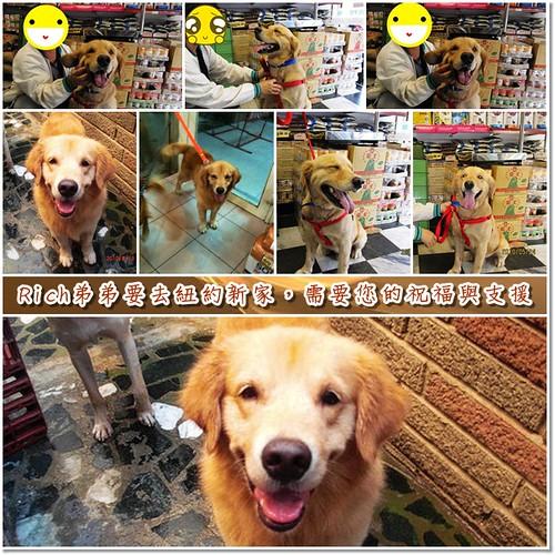 「支援與祝福」從台南縣佳里救援的黃金獵犬Rich弟弟~9月4日即將飛往紐約新家展開新的生活,需要您的祝福與支援,隨手幫忙轉PO也是非常重要~謝謝您!20100827