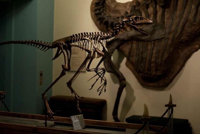 miniraptor