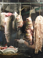 Real Hanging Fish in Hong Kong