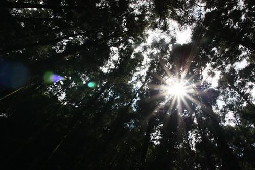 太陽製造的星芒