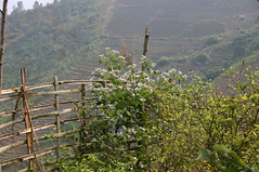 Sapa, Vietnam (sensaos) Tags: travel 2004 nature asia view north vietnam viet sapa nam azie azi sensaos