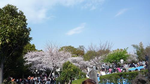 西郷山公園の花見