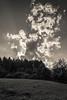 Clouds (FSR Photography) Tags: sw schwarzweis schwarzweiss monochrome monochrom tierpark clouds wolken haus himmel sky canon canon400d canondslr sun sonne sonnenstrahlen sonnenuntergang sunbeams bw blackandwhite blackwhite bäume trees travel reisefotografie reise 100v10f fsr fsrphotography