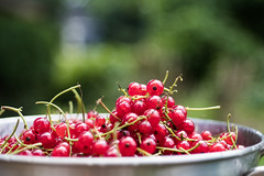 red currants (photalena) Tags: bokeh fruit food red summer currants vintagelenses tessar2850 carlzeissjena