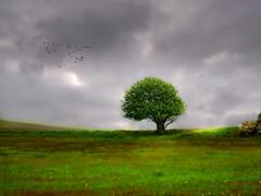 Lonely tree in Raevebjerg (ibjfoto) Tags: danmark denmark geoparkodsherred historical historie ibjensen ibjfoto natur odsherred raevebjerg rævebjerg sealand bakker hills landscape landskab nationalpark trees træer