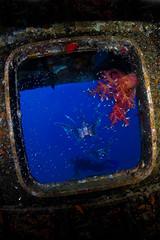 Blue screen :) (Martin-Klein) Tags: window underwater redsea bluewater diving scubadiving wreck hurghada excalibur eygpt firefish tokinafisheye flickrgolfclub eos5dmkii nikonossb105 subtronicgamma