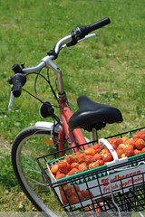 strawberries & bike