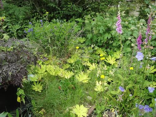 Weedy Perennial Border