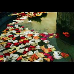 Els colors dels records (Pep Iglesias) Tags: flores flower color nikon nikkor pep 2010 flors valncia pasvalenci 1685 sueca imagepoetry d80 riberabaixa photoshopcreativo muntanyetadelssants oltusfotos