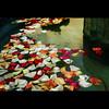 Els colors dels records (Pep Iglesias) Tags: flores flower color nikon nikkor pep 2010 flors valència paísvalencià 1685 sueca imagepoetry d80 riberabaixa photoshopcreativo muntanyetadelssants olétusfotos