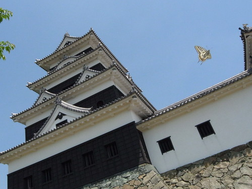Ozu castle with Papilio xuthus