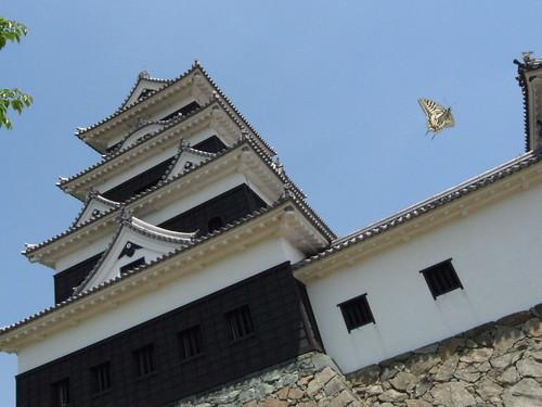 Ozu castle with Papilio xuthus