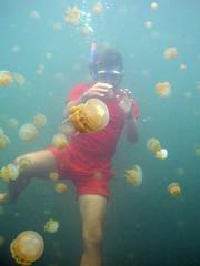 Jellyfish harmless Attack - Pulau Kakaban