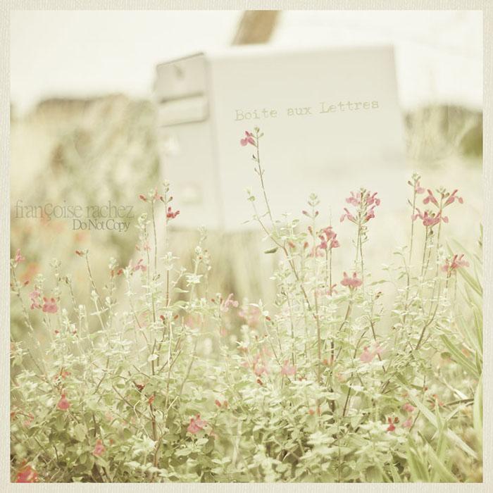 Une douce attente pour une lettre~Sweet awaiting for a letter
