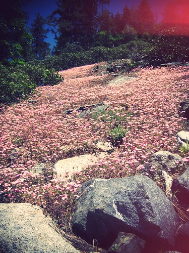 pink wild flowers_effected