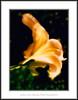 En el calor de la noche (Jose Luis Mieza Photography) Tags: flowers flores flower fleur fleurs flor benquerencia florews reinante jlmieza reinanteelpintordefuego joseluismieza