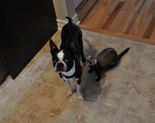 Leroy & Spunky
