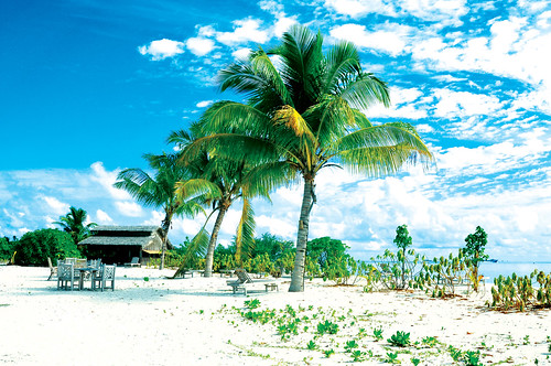 フリー写真素材, 自然・風景, ビーチ・砂浜, 樹木, モルディブ共和国, やしの木,