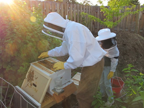 Beekeeping in the afternoon sun