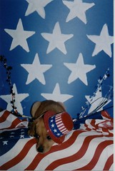 From downstairs 005 (fotochell) Tags: portrait pet puppy 4th 4thofjuly petportrait mountainfeist puppyportrait