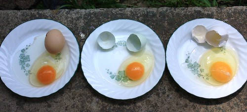 4790889034 0008fe1403 The Egg Experiment: Store Bought vs. Home Grown