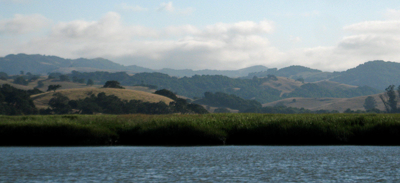 Marin County Scenery