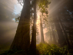 Redwoods California (kevin mcneal) Tags: california trees weather northerncalifornia forest atmosphere redwoods sunrays anawesomeshot delnorteredwoods natureselegantshots crepsecularrays oldestlivingtrees