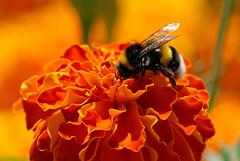 Tamron 70-300 Macro Bee
