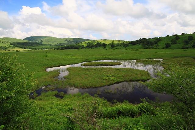 八島ヶ原湿原の湿地