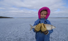 Kid with a keeper (Fish as art) Tags: schnee snow canada ice kids vinter spring fishing nikon wideangle kinder arctic neve neige enfants pescado fotografia northwestterritories netting biology talvi pesca snø winterfun yellowknife greatslavelake kanada snjór fishery fiske börn freshfish wildfood schneefall kalastus arktis havazás vinterfiske eisangeln zimą fischerei vinteren yellowknifebay lavaret talvikalastus cityofyellowknife lakewhitefish coregonids 名カナダ 米国の北部にある国 canadianfishes połowów winterfischerei połowówzimą