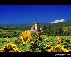 Hunawihr 15 (Hatuey Photographies) Tags: church landscape alsace sunflower paysage église tournesol girasol sonnenblumen hunawihr tripleniceshot hatueyphotographies ©hatueyphotographies