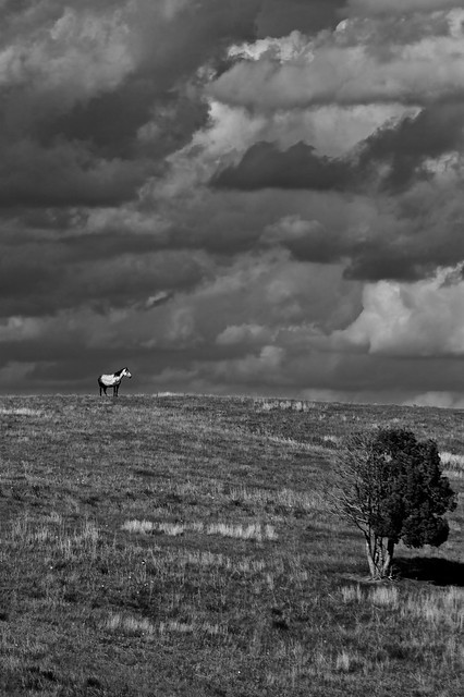 The Horse At The Horizon, B&W