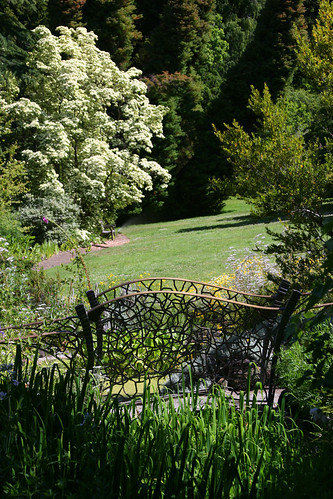 bridge and cornus kousa