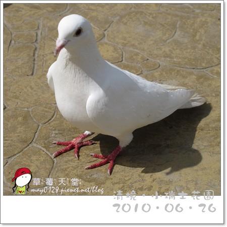 清境小瑞士花園41-2010.06.26