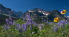 Bliss (BigSkyKatie) Tags: park flowers wild summer mountain snow mountains nature landscape rockies carved montana natural meadow july glacier erosion national rockymountains wildflowers prairie peaks gaillardia lupine glacial bigskycountry manyglacier supershot natureoutpost katielasallelowery