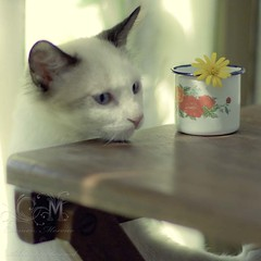 Like mommy, i heart flowers ~ Day 71 (Carmen Moreno Photography (BUSY)) Tags: 50mm bokeh kittie chlolovingflowers