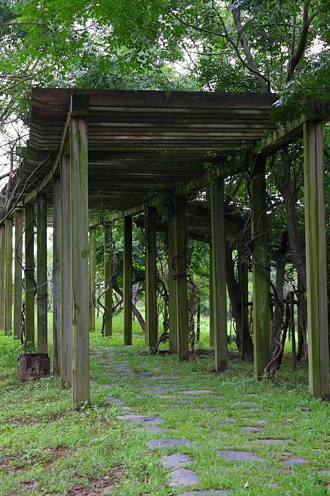 台南白河蓮花公園(水連公園)0015