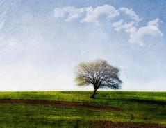 Aerial Land of Spring (Monsieur Nounou) Tags: tree landscape countryside spring wind aerial campagne arbre aerien nikond90