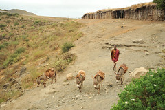 2b. Donkeys descending from salt stores to the lake