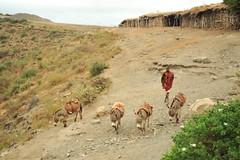 2b. Donkeys descending from salt stores to the lake
