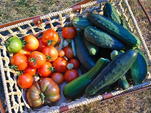 August Harvest 2