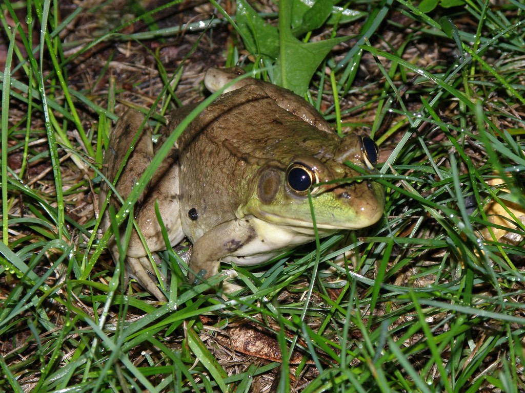 field herp forum view topic smooth green eggs and more