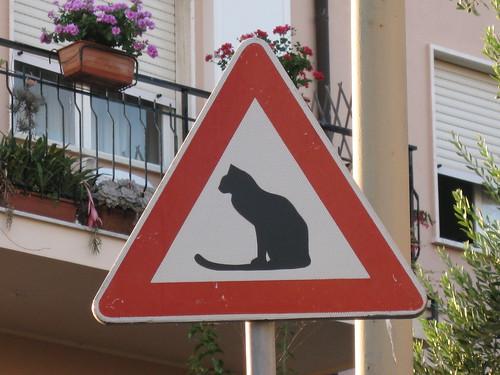 Miau - Attenzione