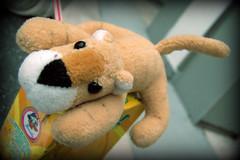 El Cheeto Chato (MaPeV) Tags: viaje de mascota cheeto peluche chato