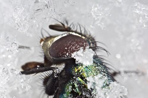 atrapada en el ártico