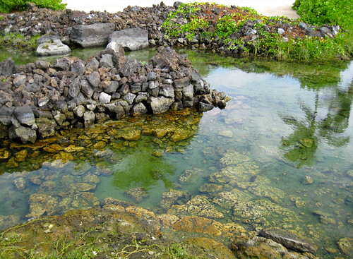 One of the Kūkio anchialine ponds