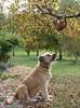 Help ! (Rollerphilc) Tags: chien nature animal canon fun funny chat humour gag arbre cotcpersonalfavorite friendlychallenges diamondsawards starsawards tripleniceshot